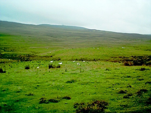 Sheep on the moor between Kirkmichael and Pitlochry