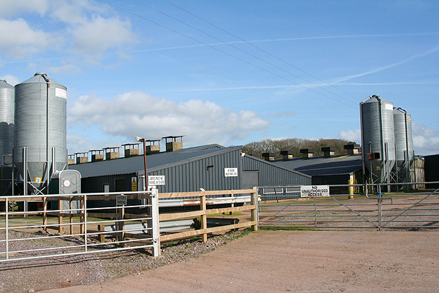 Thelbridge: poultry farm