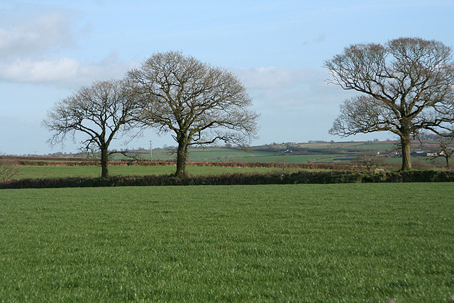 Thelbridge: near Billhole Farm