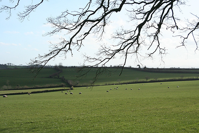 Thelbridge: Five Oaks Moor