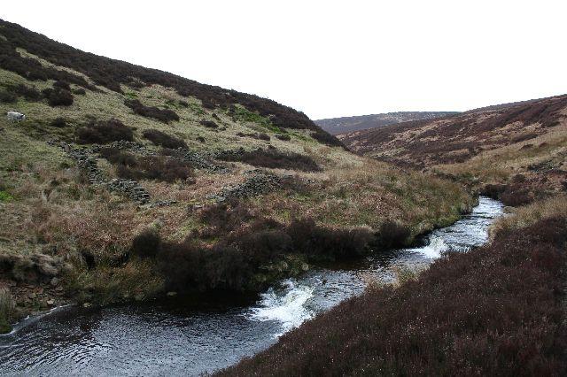 Ruined sheepfold, Upper Derwent