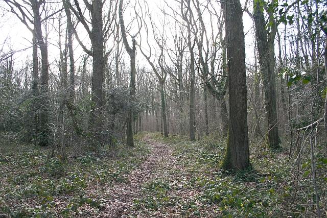 Track through Hall Wood