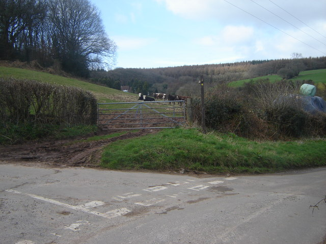 Junction of single track roads, with cow field