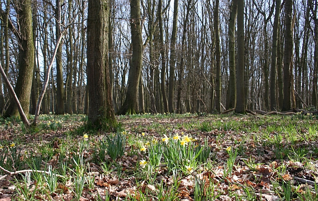 Hall Wood - Grazed Area