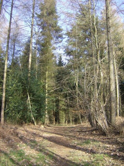 Highclere Wood