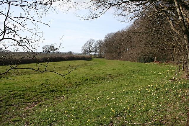 Old Sunken Roadway near Hall Wood