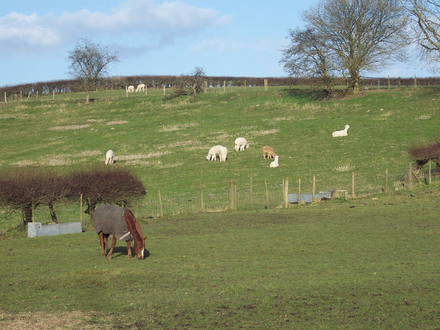 A pony and alpaca at Fonthill Bishop