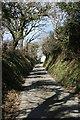 SX2867 : Sunken Lane by Tony Atkin