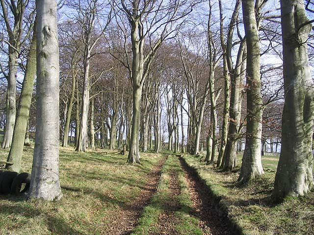 On a track towards Marygoldhill Plantation