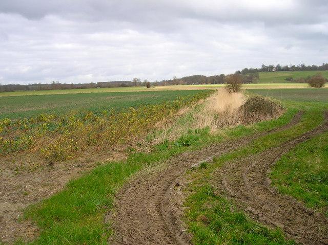 Farmland, Tillingham Valley