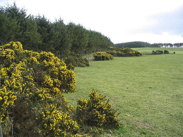 Gorse edged pasture field