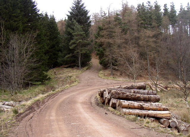 Bridleway to Heigh leaves the forest road in Kidland