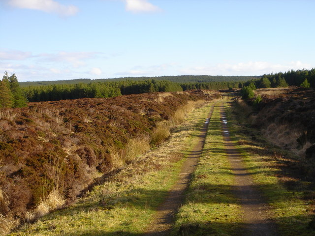Camster Forest