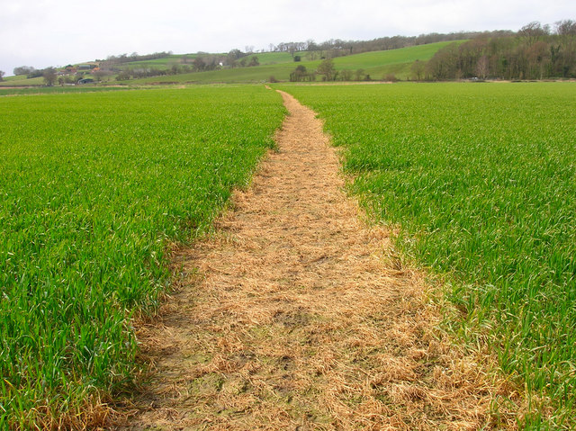 Footpath across Brede Level