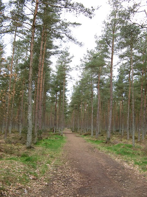 North Wood, Meikleour