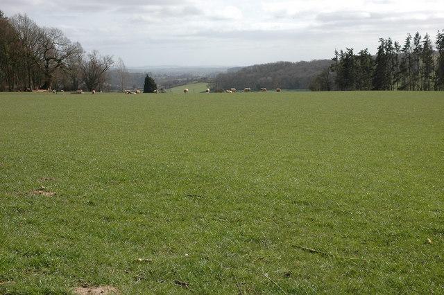 Field above Pervin Farm