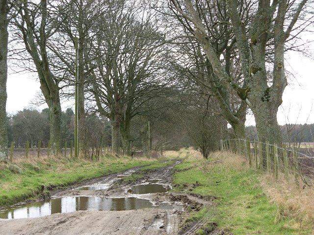Tree lined farm track