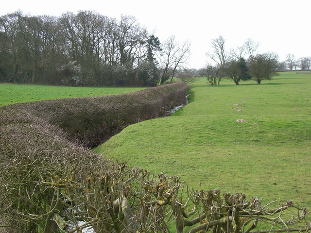 Stream & Hedge, east of Stoke Golding