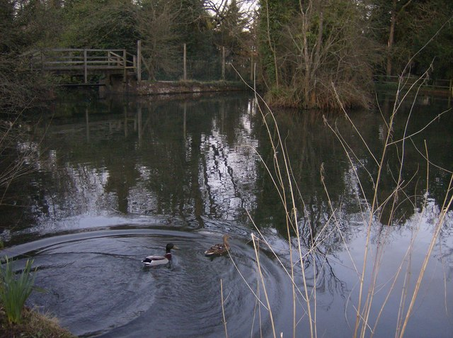 Kingsclere Pond