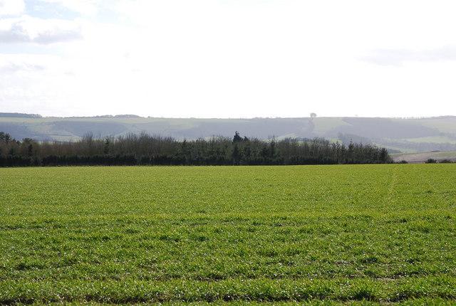 Faint footpath across the field