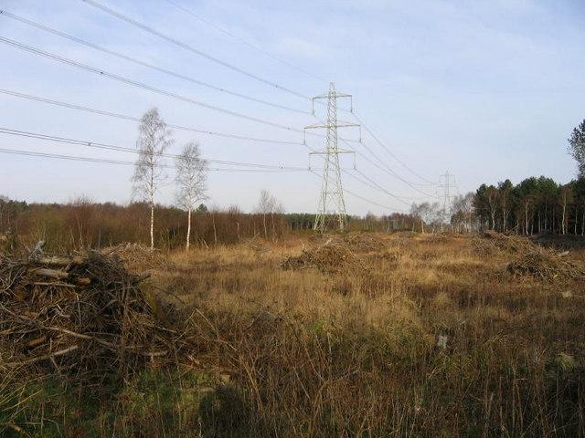 Heath Restoration
