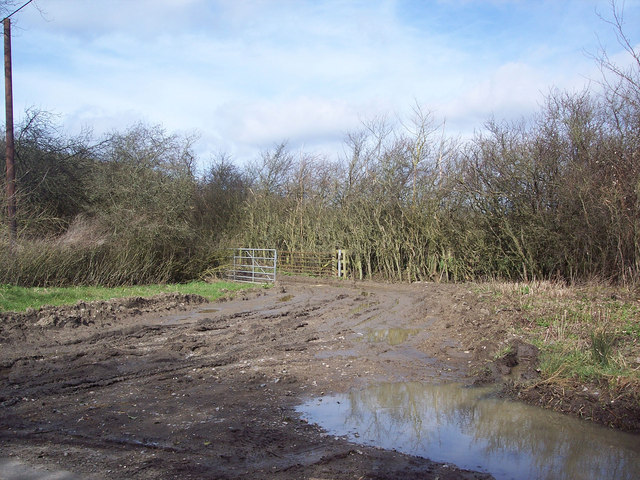 Muddy field entrance near Jolliffe's Farm, Stour Row