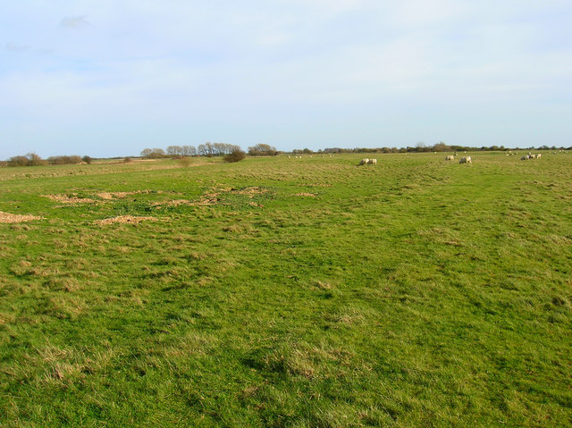 Pasture near Camber Castle