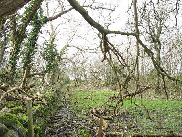 The lower part of the Cefn Gwyn path
