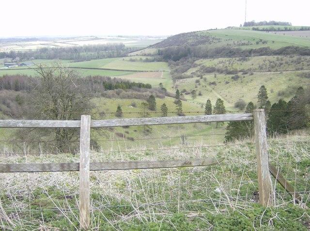 The Warren, White Hill