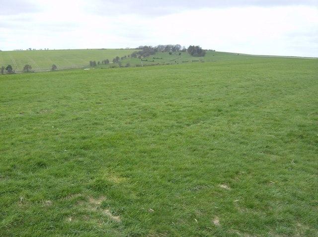 Gallops on Cannon Heath Down