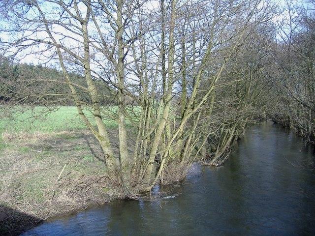 The River Arrow, near Titley
