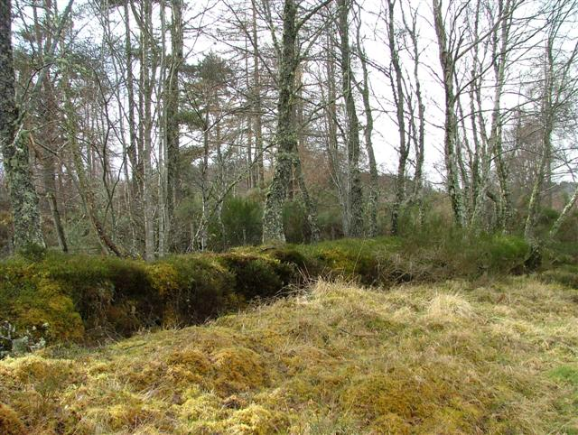 Woodland at Teandalloch