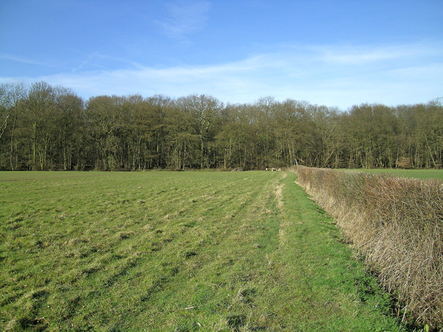 Beachet Wood from footpath near Crumps Farm
