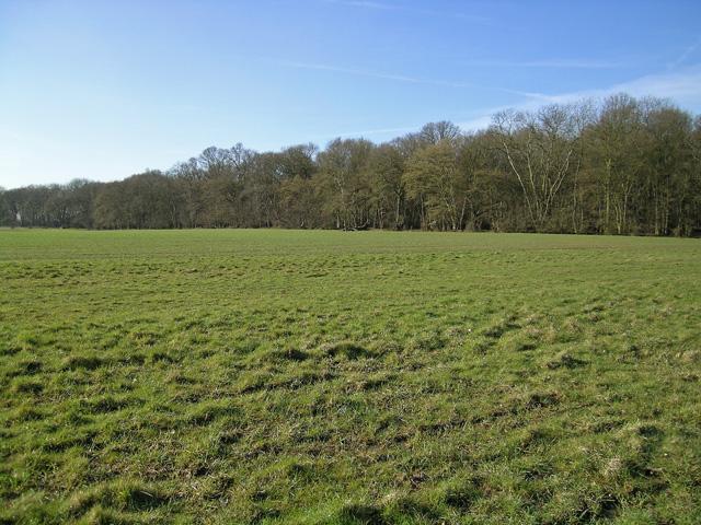 Beachet Wood from nearby field