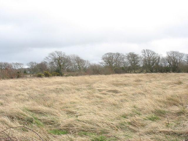 Rough grazing at Wern Farm