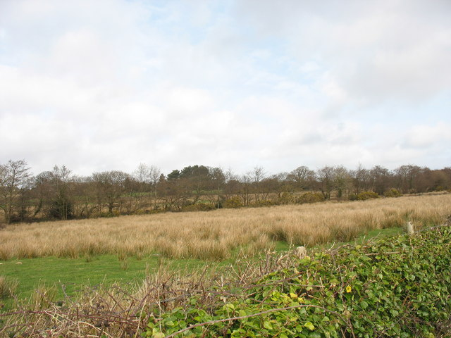 Bog and rough grazing north of the road