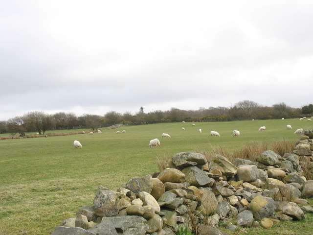 Sheep on permanent pasture by Gwyndy Covert