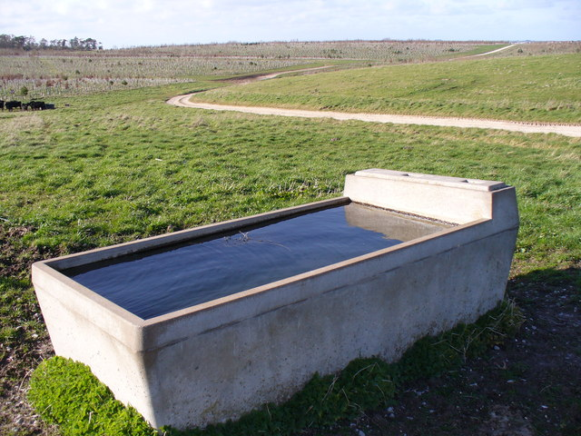Water Trough and Downland