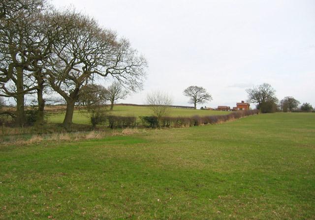 Sheep pasture south of Corra Bank