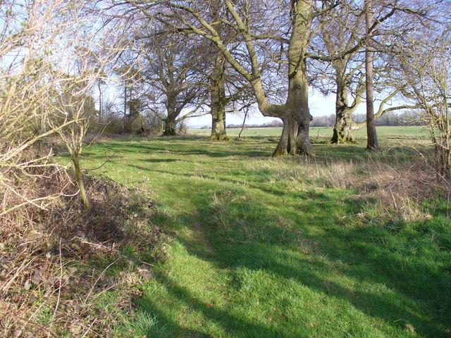 Copse South of Maddington Down