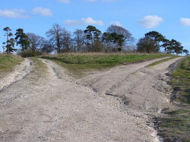 Bridleway Fork, South of Maddington Down