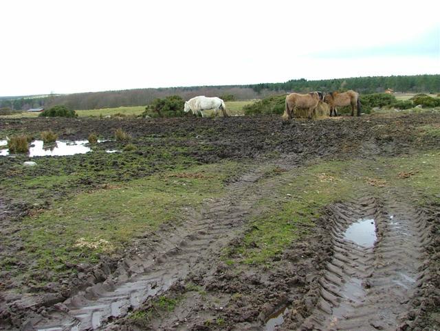 Horses at Muiryden