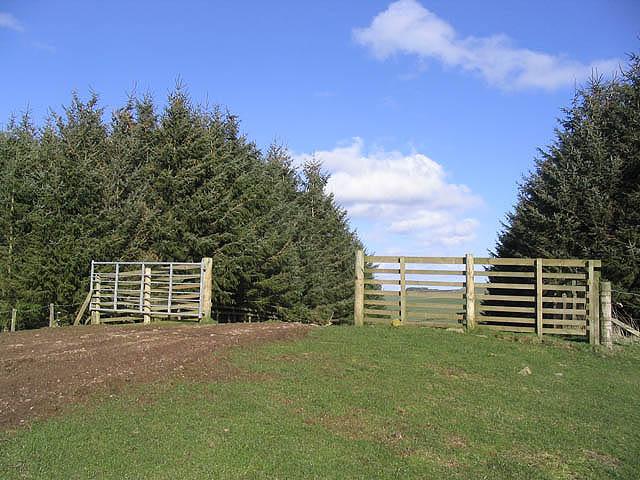 Forest break at Rowantree Law