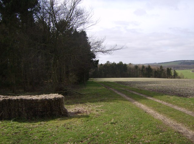 Byway on Great Litchfield Down