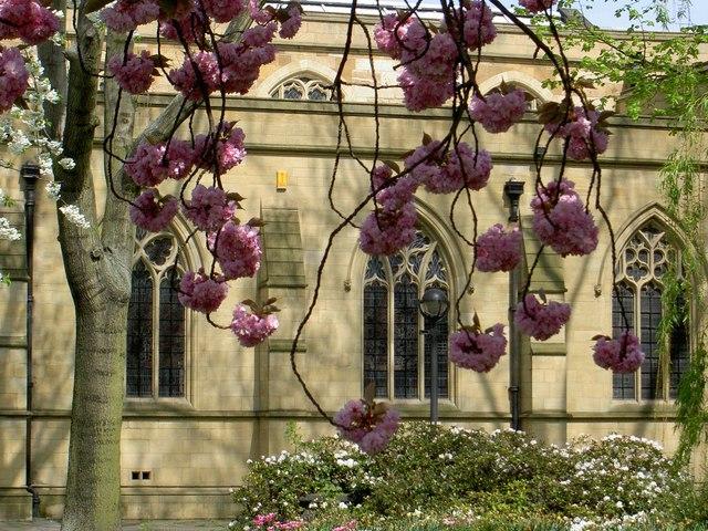 Blossom at Dewsbury Minster