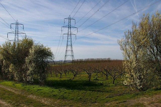 Kent Orchard