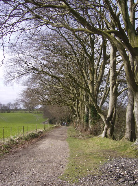 Avenue of trees on Nuthanger Down
