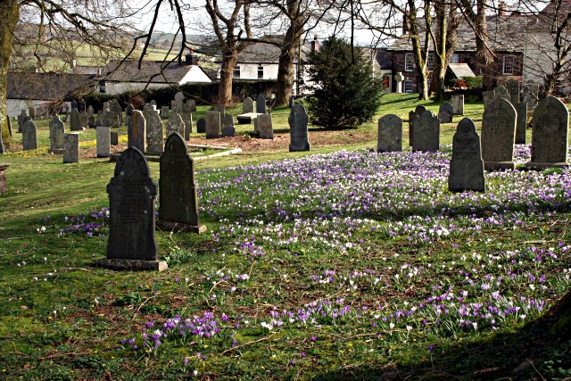 Churchyard with Crocusus