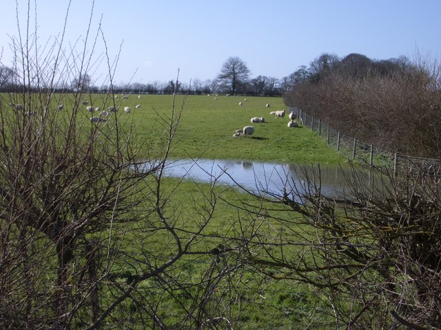 Sheep Pastures at Olney Park Farm