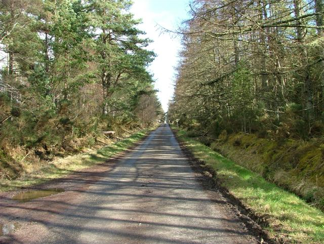 Road Through the Trees